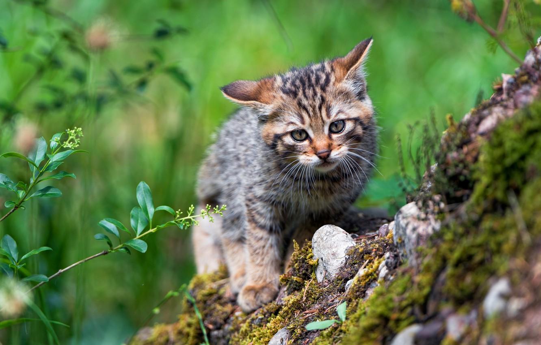 меню найдутся лесной котенок картинки меньшей мере