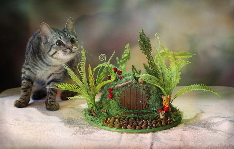 Фото обои кот, поза, стол, животное, Ковалёва Светлана, Светлана Ковалёва, топиарий