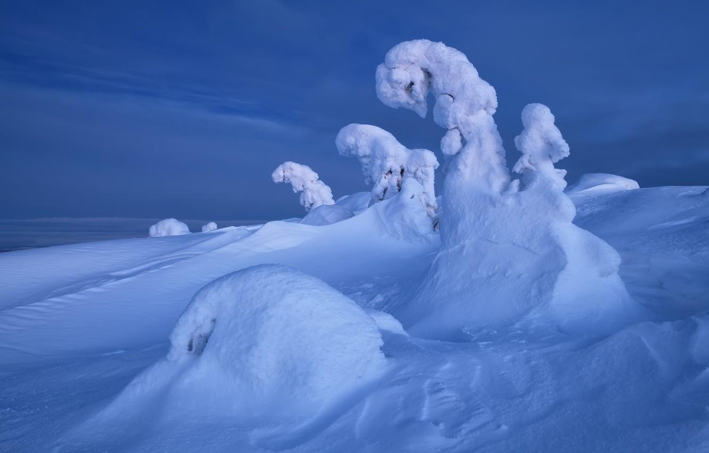 Фото обои зима, снег, деревья, пейзаж, природа, ели, сугробы, Кольский полуостров, Максим Евдокимов