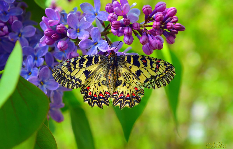 Фото обои Макро, Весна, Бабочка, Spring, Macro, Butterfly