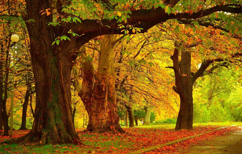Фото обои Осень, Деревья, Fall, Autumn, Trees