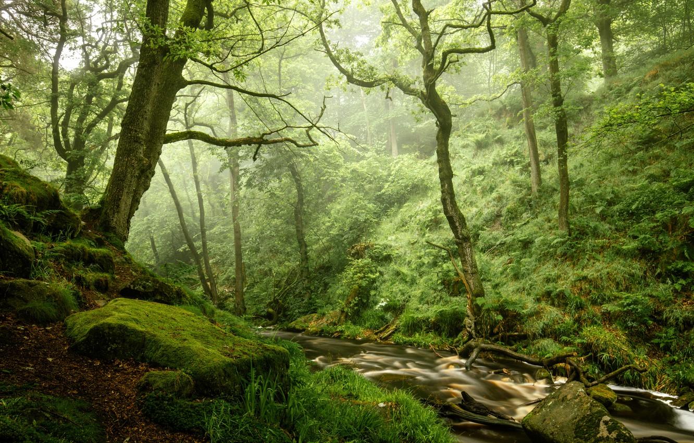 Фото обои лес, камни, мох, речка