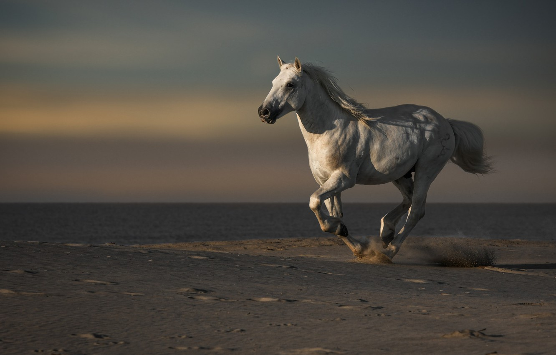 Картинки с лошадьми на бегу