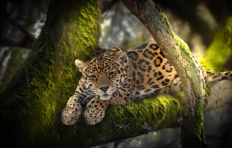 Обои Вода, леопард, дерево, цветы. Разное foto 16