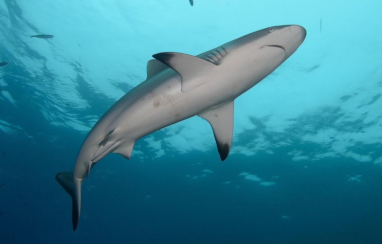 Фото обои вода, океан, акула