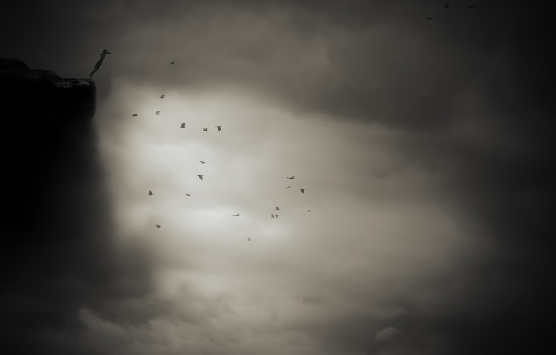 Фото обои полет, птицы, обрыв, flight, birds, cliff, Nic Keller