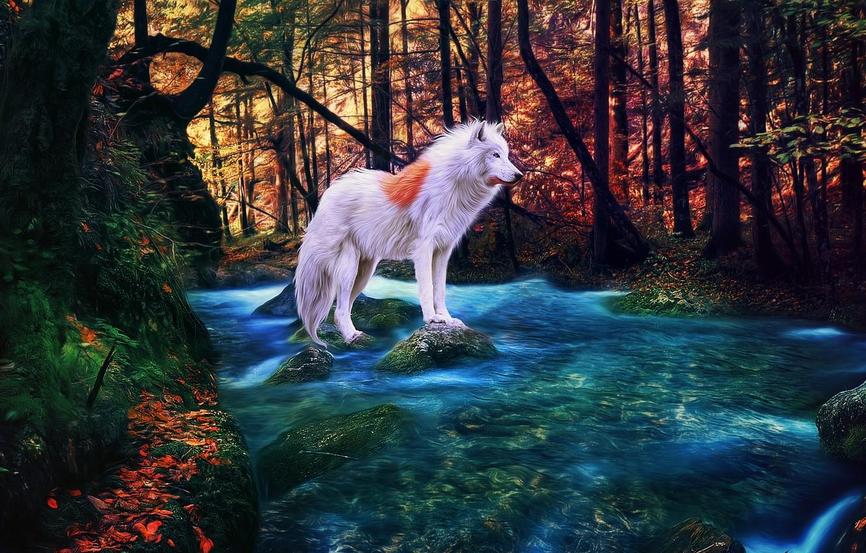 Фото обои осень, лес, река, альбинос, белый волк