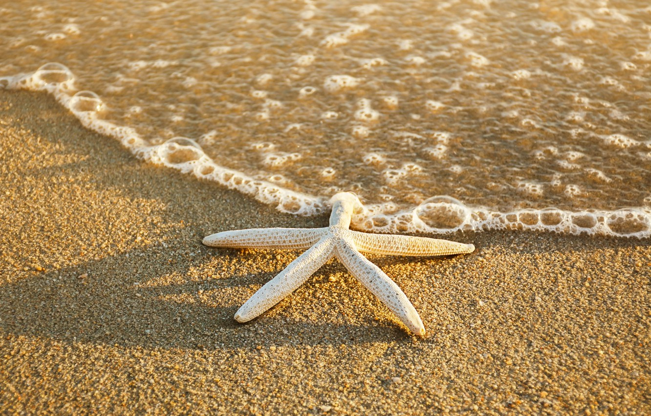 Фото обои песок, море, пляж, лето, звезда, summer, beach, sea, sand, starfish