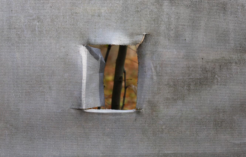 Фото обои природа, окно, карантин, изоляция