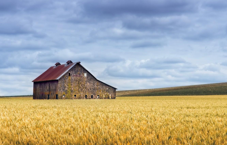 Фото обои поле, лето, дом, колосья