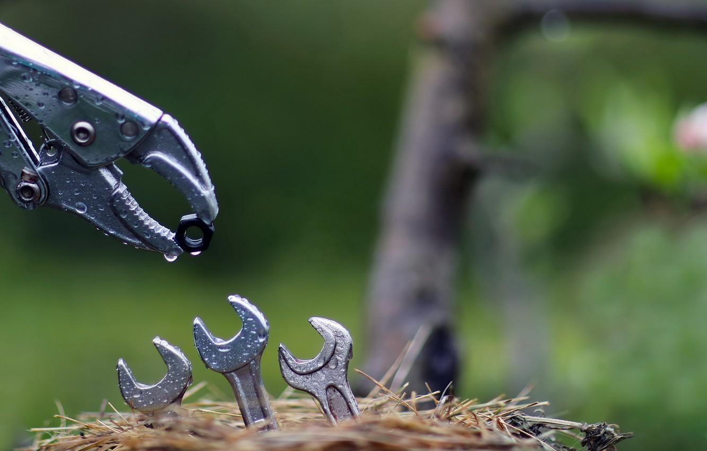 Фото обои природа, гнездо, ключи, гайка