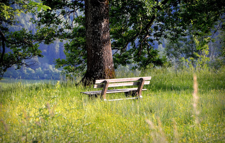 Фото обои трава, дерево, релакс, скамья