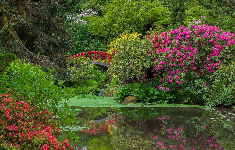 Обои цветы, сша, кусты, ball ground gibbs gardens. Природа foto 10