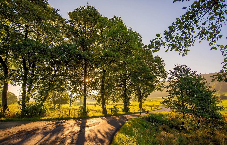 Фото обои дорога, пейзаж, природа, парк, красота