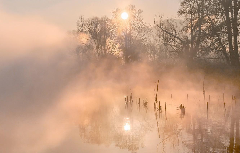 Обои елка, туман, утро. Природа foto 18