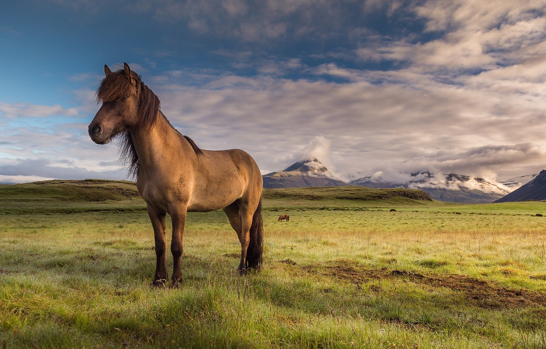 Фото обои небо, природа, лошадь