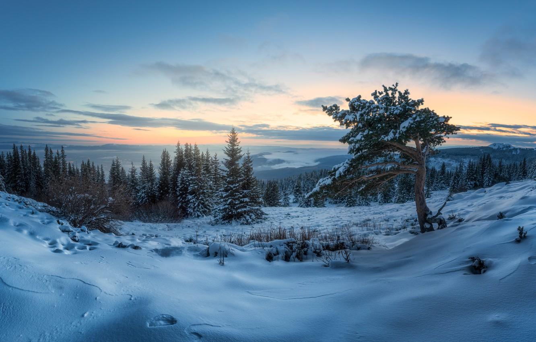 Фото обои зима, снег, деревья, пейзаж, природа, рассвет, утро, панорама