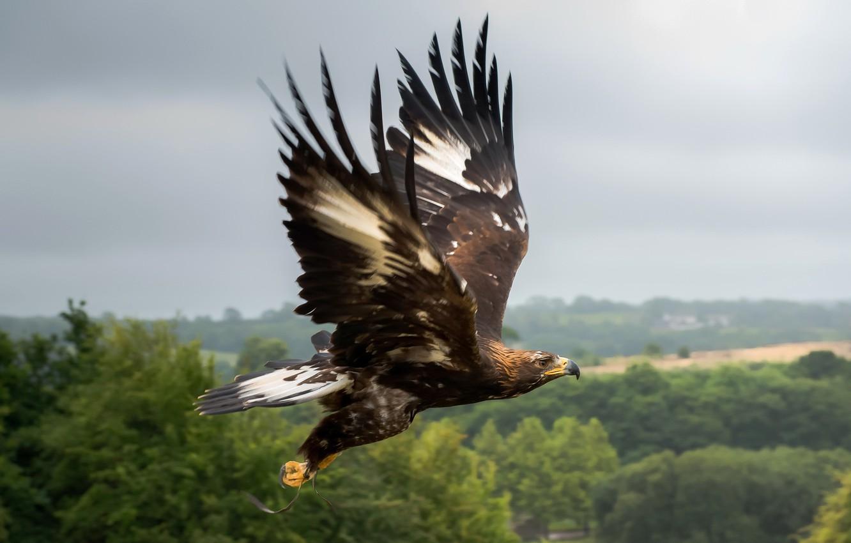 видов, фотографии летящего орла оскорбляют злят собеседника