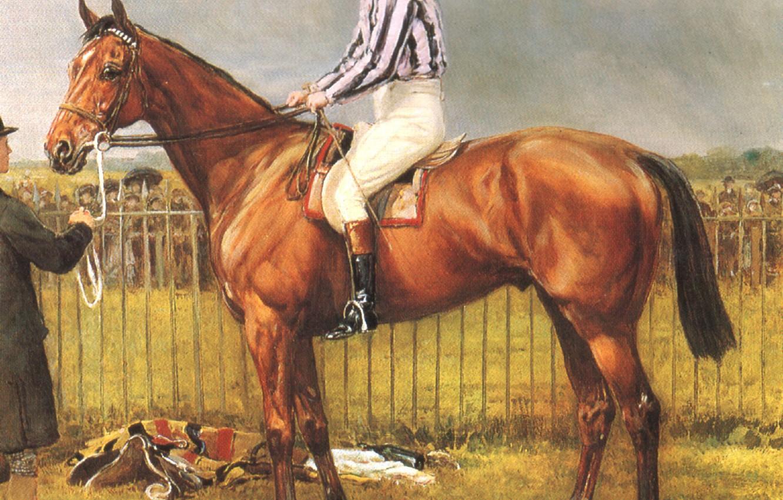 Фото обои конь, лошадь, всадник, коричневая, Конный спорт, HARDY