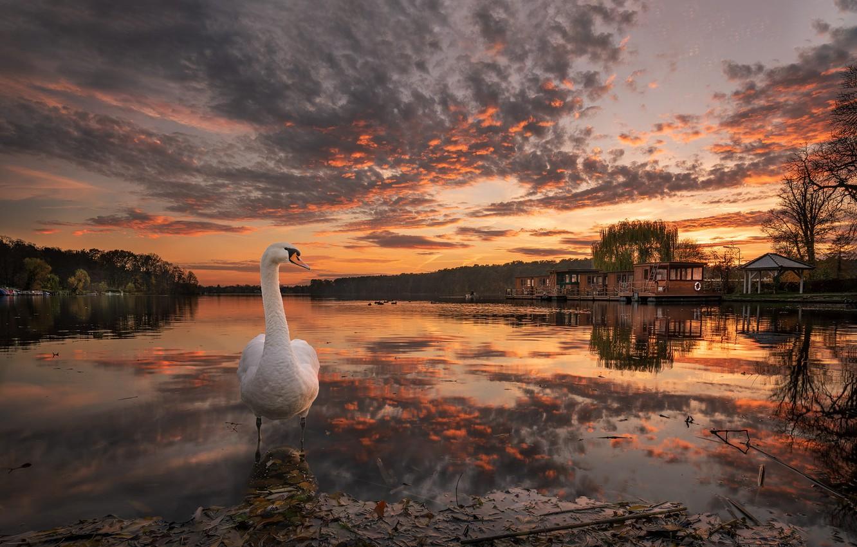 Фото обои осень, пейзаж, природа, озеро, птица, пристань, вечер, лебедь, леса