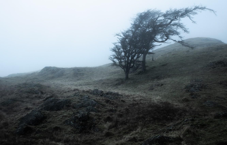 Фото обои деревья, туман, камни, дерево, утро, склон, холм, дымка, сизый