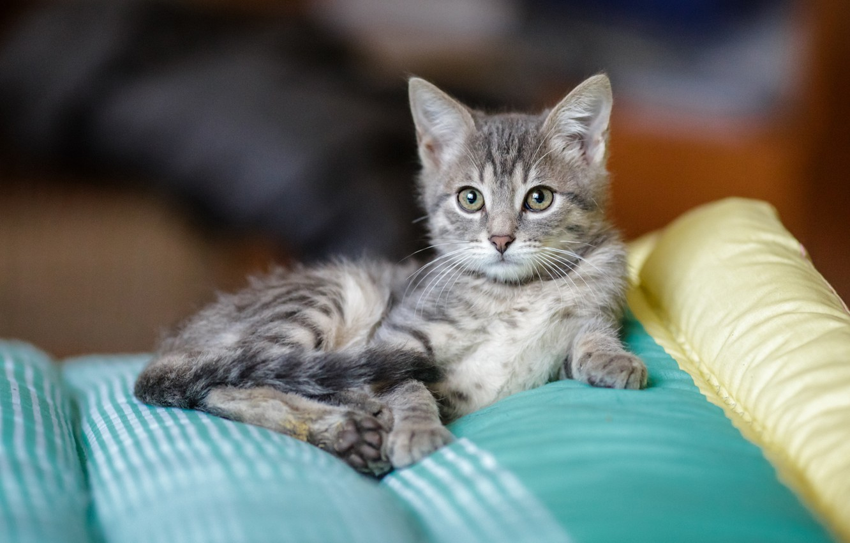 фото серых и полосатых котят рисуете лицо волосы