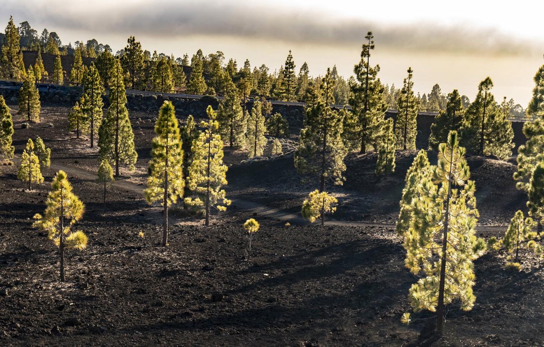 Фото обои дорога, лес, природа