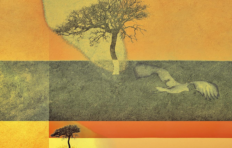 Фото обои дерево, цвет, форма