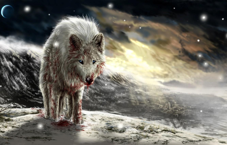 Фото обои закат, кровь, волк