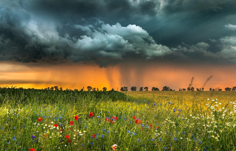 Фото обои поле, пейзаж, цветы, тучи, природа, травы