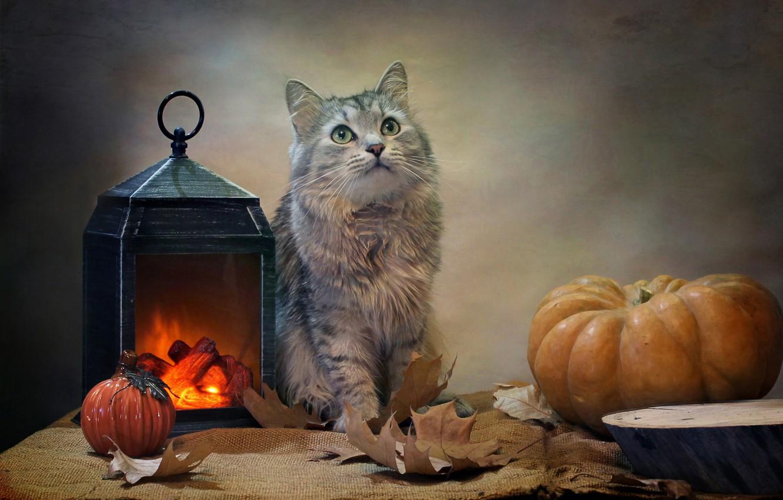 Фото обои кот, листья, животное, фонарь, тыквы, ткань, мешковина, Ковалёва Светлана, Светлана Ковалёва