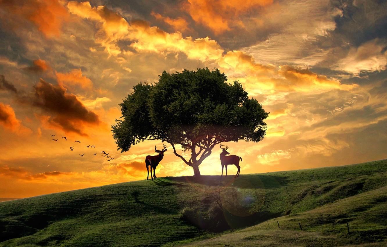 Фото обои поле, лето, небо, солнце, облака, свет, закат, птицы, рендеринг, дерево, холмы, стая, холм, арт, пара, …