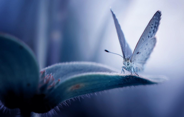 Фото обои цветок, бабочка, flower, butterfly, Fauzan Maududdin