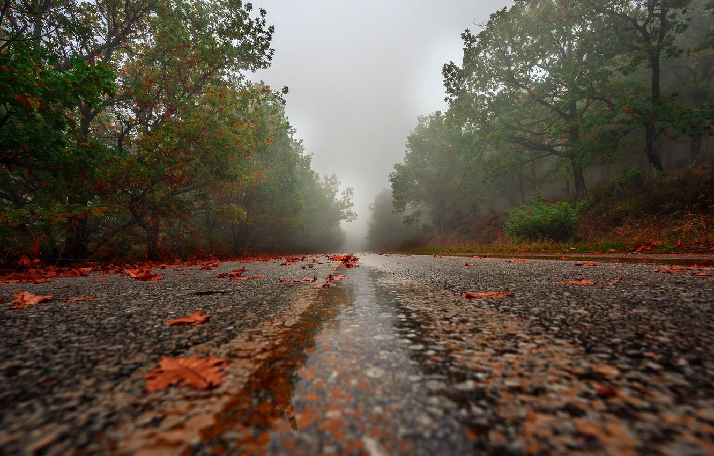 Фото обои дорога, осень, листья, деревья, туман, дождь, листва, шоссе, листопад, кленовые, осенние, лесополоса, осенние листья