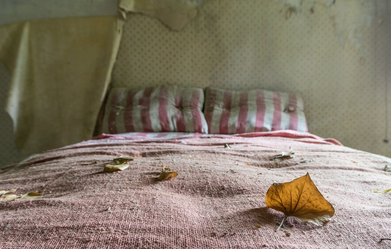 Фото обои лист, кровать, натурализм