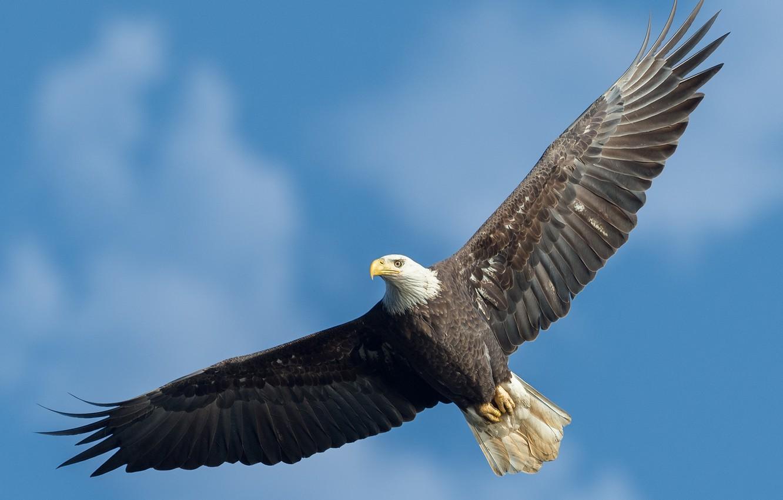 фото и картинки парящего орла помнить, что медь