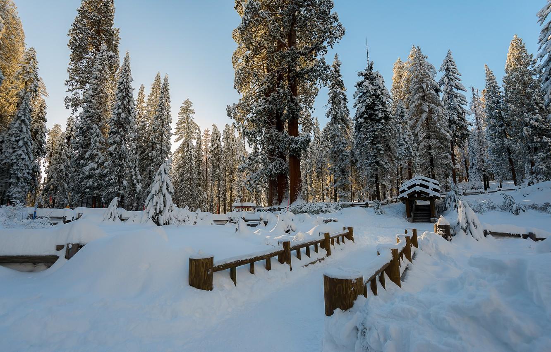 Фото обои зима, снег, деревья, пейзаж, зимний, елки, forest, landscape, nature, beautiful, winter, snow, fir tree