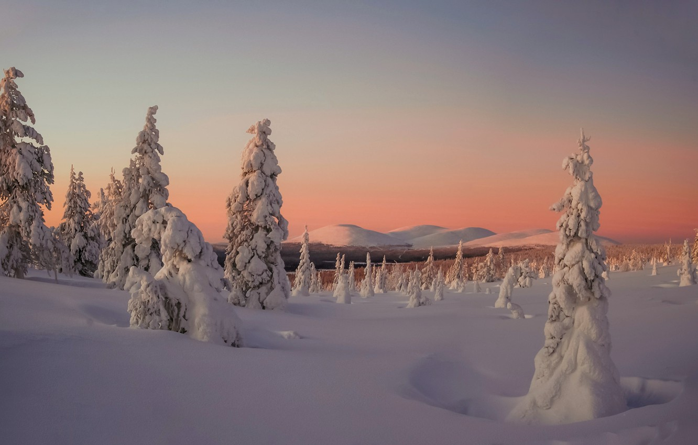 Фото обои зима, снег, деревья, пейзаж, закат, горы, природа, ели, Финляндия, Лапландия
