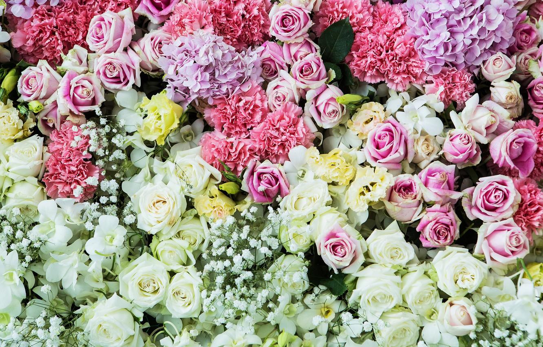 Фото обои цветы, фон, розы, colorful, розовые, white, белые, бутоны, pink, flowers, roses, bud