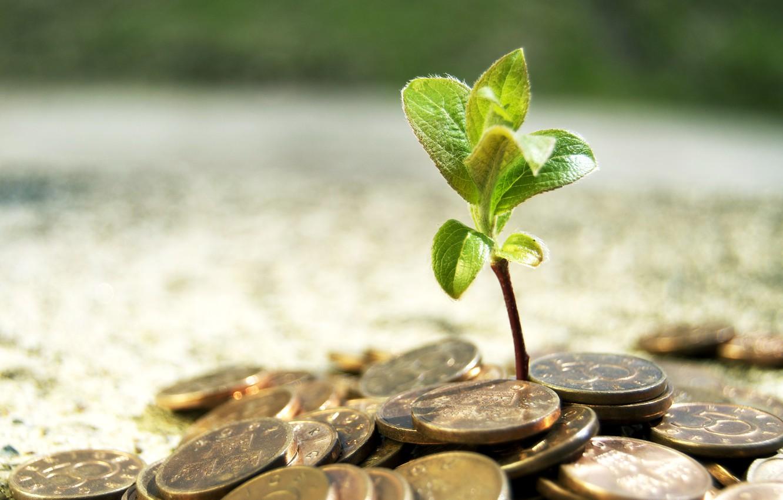 Фото обои дерево, росток, деньги, монеты