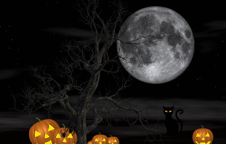 Фото обои кошка, ночь, дерево, луна, пауки, тыквы, Хэллоуин, 31 октября