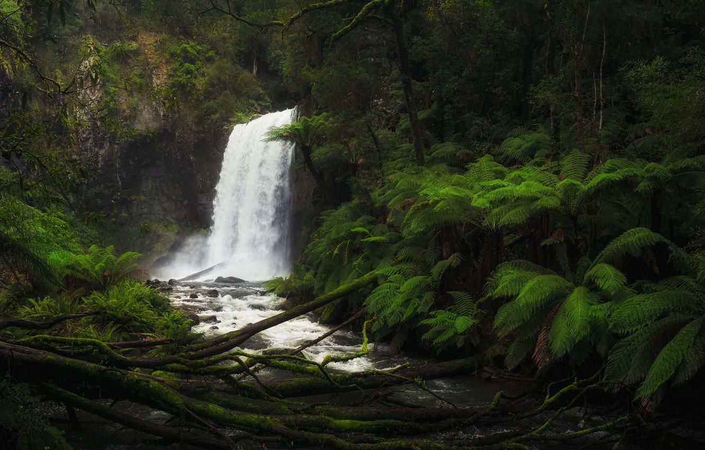 Фото обои лес, река, водопад, Виктория, Австралия, папоротник, Australia, Victoria, Aire River, Hopetoun Falls, Водопад Хоуптаун, Река …