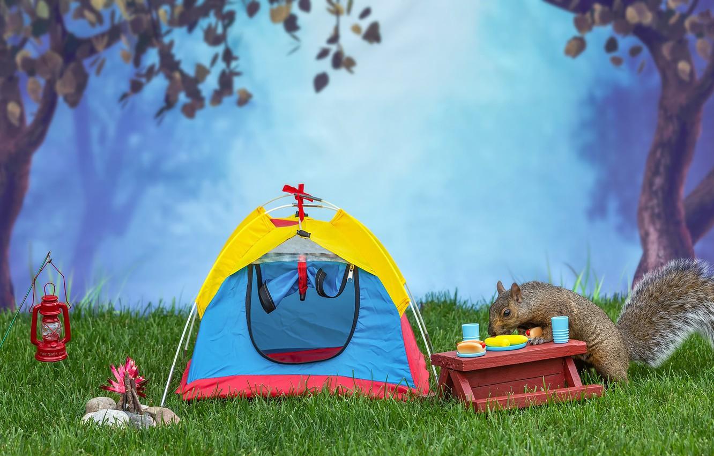 Фото обои лес, трава, деревья, природа, поза, туман, парк, поляна, листва, еда, белка, чаепитие, керосинка, посуда, палатка, …