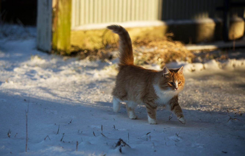 Обои котёнок, прогулка, пушистый. Кошки foto 17