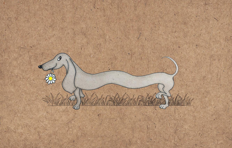 Фото обои рисунок, собака, такса