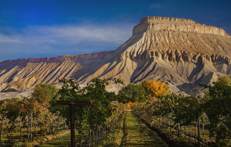 Фото обои пейзаж, горы, природа, красота, простор, панорама, виноградники