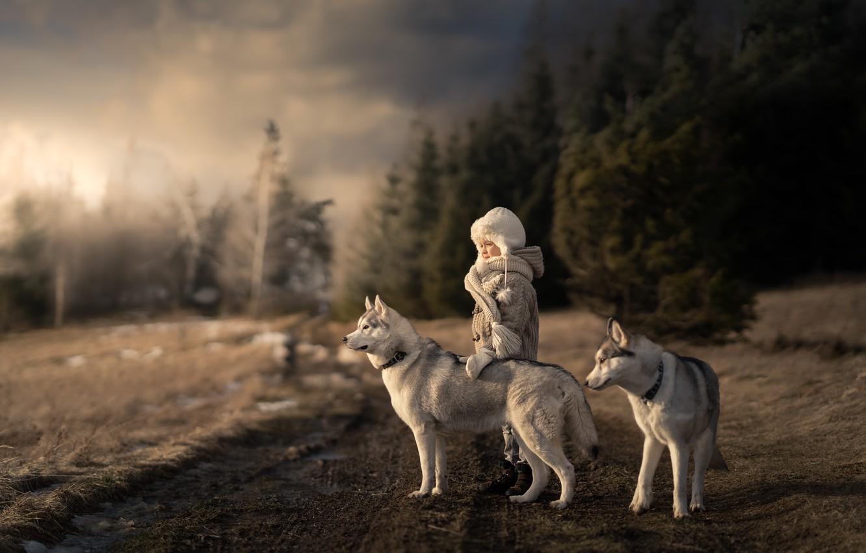 Фото обои дорога, собаки, девочка