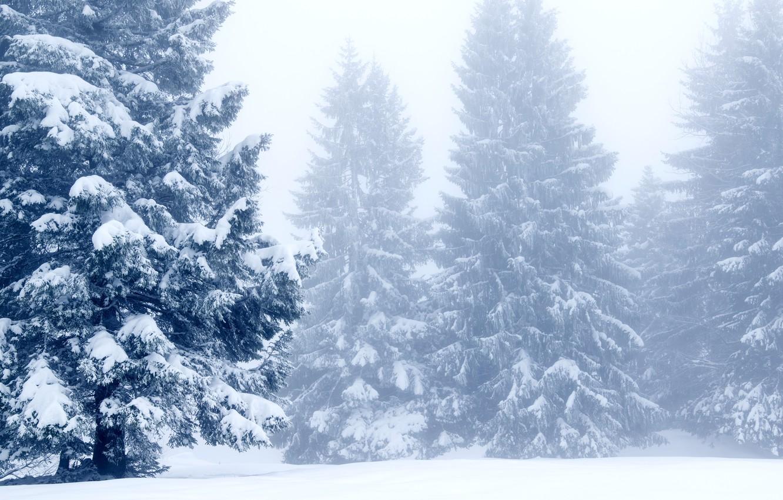 Фото обои зима, снег, деревья, пейзаж, зимний, елки, landscape, nature, beautiful, winter, snow, fir tree