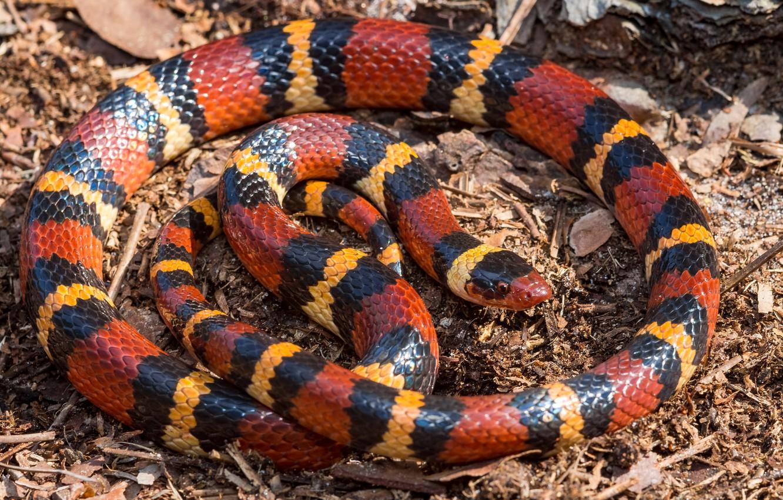 которым убивали картинки полосатых змей спасибо вам