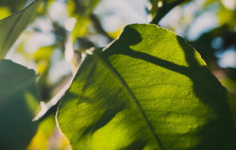 Фото обои листья, макро, лист, солнечный свет